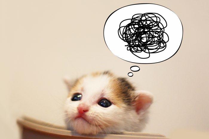 悩んでる猫イメージ