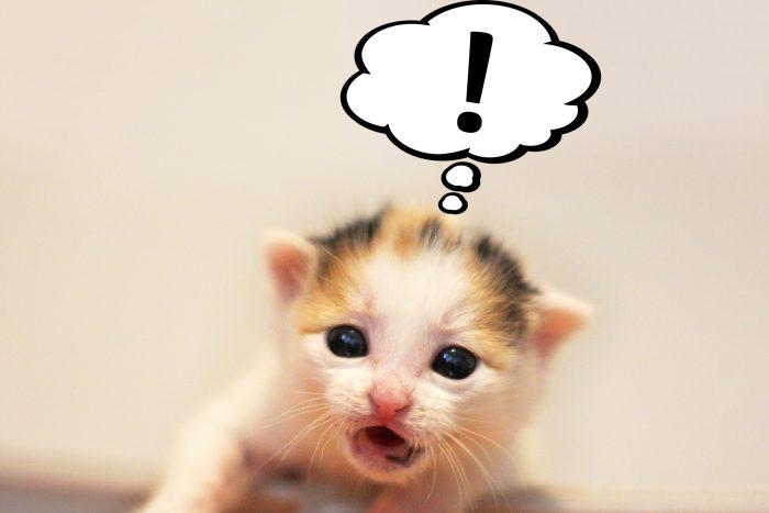驚いてる猫イメージ