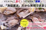 期間限定!サロマ湖産の牡蠣が入荷したので、買えば買うほどお得なキャンペーンを開催します!(〜12/20※売切御免)